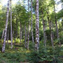 Qu'est-ce qu'un bain de forêt ?