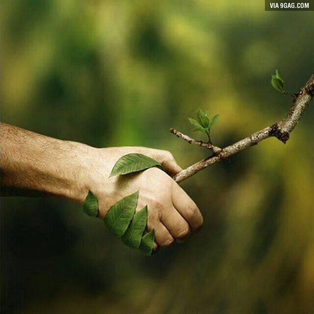 L'effet miroir de la forêt