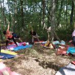 Photos du stage yoga en forêt
