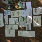 Stage de dessin «Et si je trouvais mon style en m'aidant de la forêt ?»