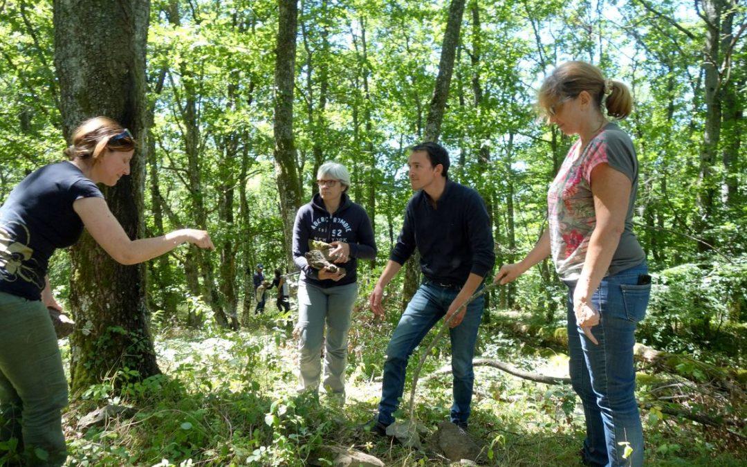 "Formation ""forêt et relations collectives"""