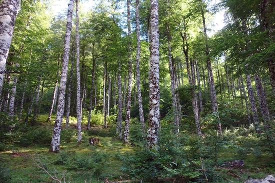 Bain de forêt / sylvothérapie