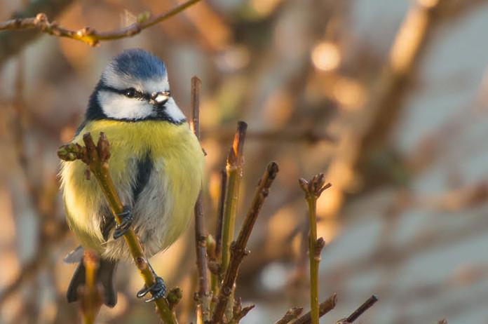 Bain de forêt nocturne et matinal au chant des oiseaux