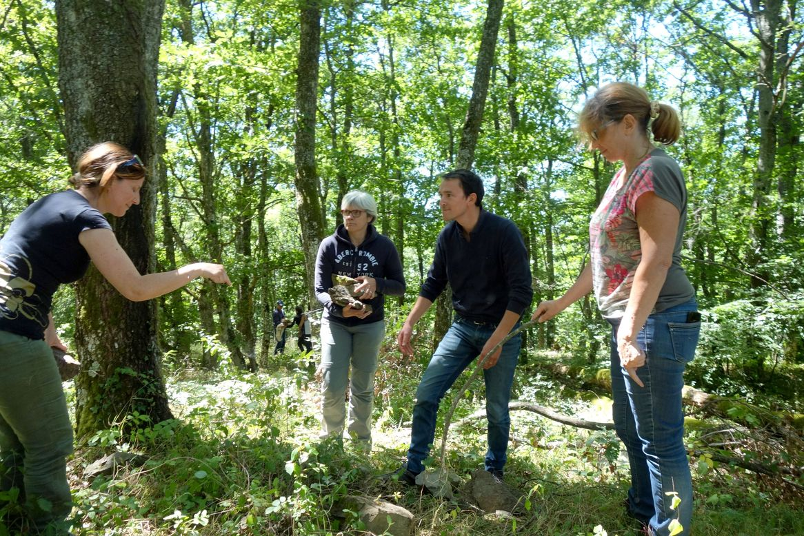 "Formation ""forêt et relations collectives"""