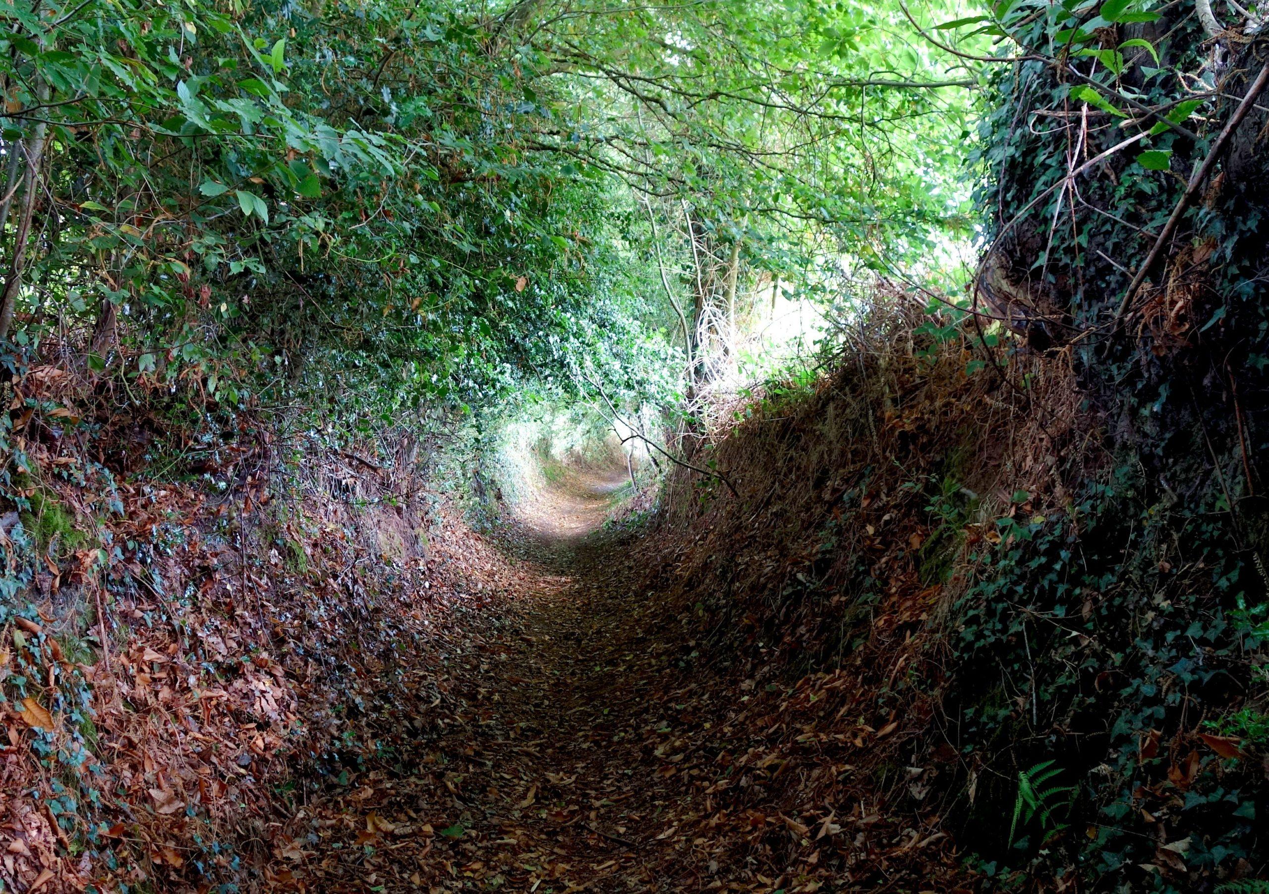 La forêt, un catalyseur de transitions individuelles et collectives